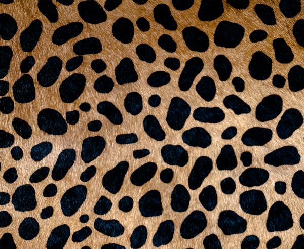 Clare V. Flat Clutch in Leopard Hair