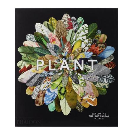 Library Plant: Exploring The Botanical