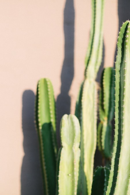 LOFT CREATIVE cactus print no. 39