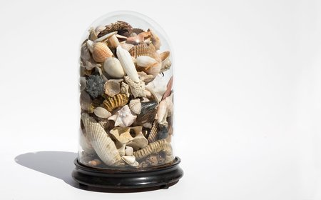 Found By Kindred Black Vintage Specimen Dome With Shell Collection