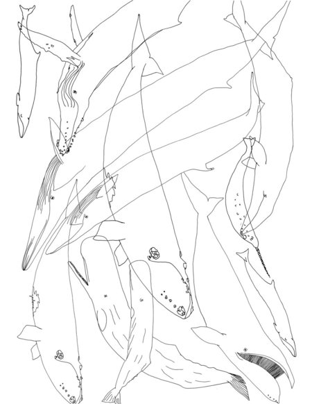 Youloune Whales #1 drawing - black/white