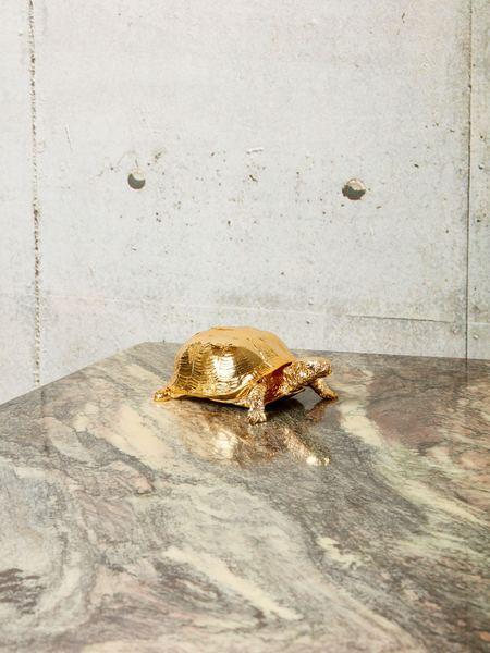 Harry Allen Box Turtle Box