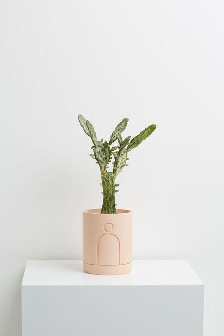 Capra Designs Etch Planter - Salt