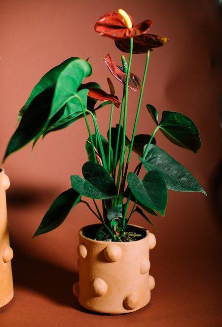 Crybaby Clay Bumpy Planters - Terracotta