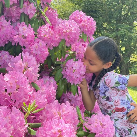 KIDS Romey Loves Lulu Roses Skater Dress - rose