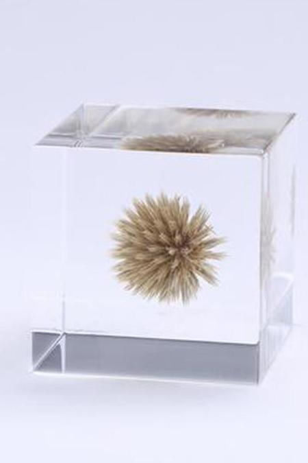 Usagi No Nedoko Sola Cube: Globe Thistle