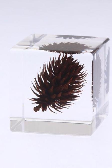 Usagi No Nedoko Sola Cube - Nogurumi